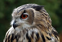 National Birds of Prey_Centre