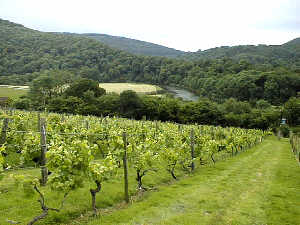 Parva Farm Vineyard